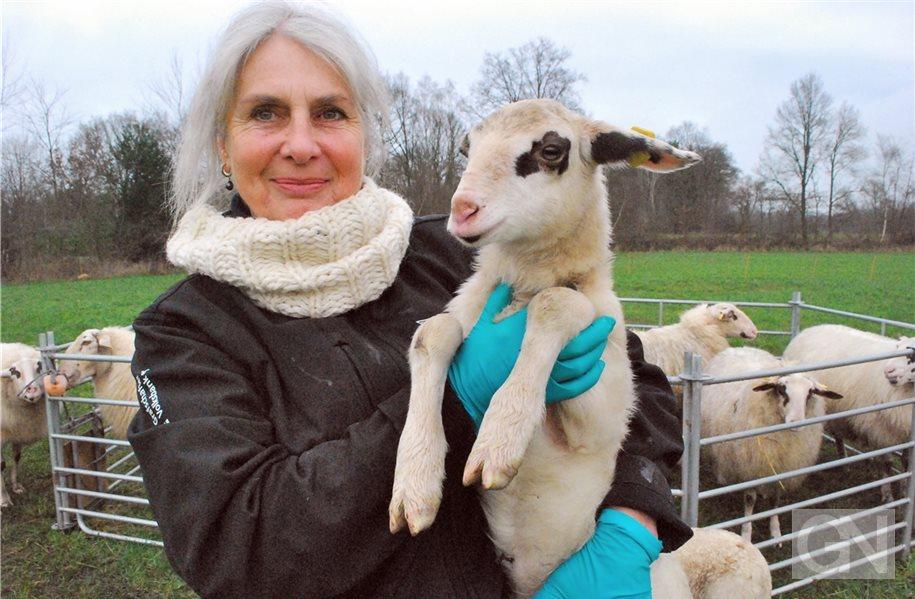 In der Grafschaft ist Gonnie van Amelsvoort zur Hobbyzüchterin von Schafen geworden. Zu Ihrer Herde gehört auch das Lamm Hannah, das Gonnie hier in die Kamera hält. Foto: Austrup