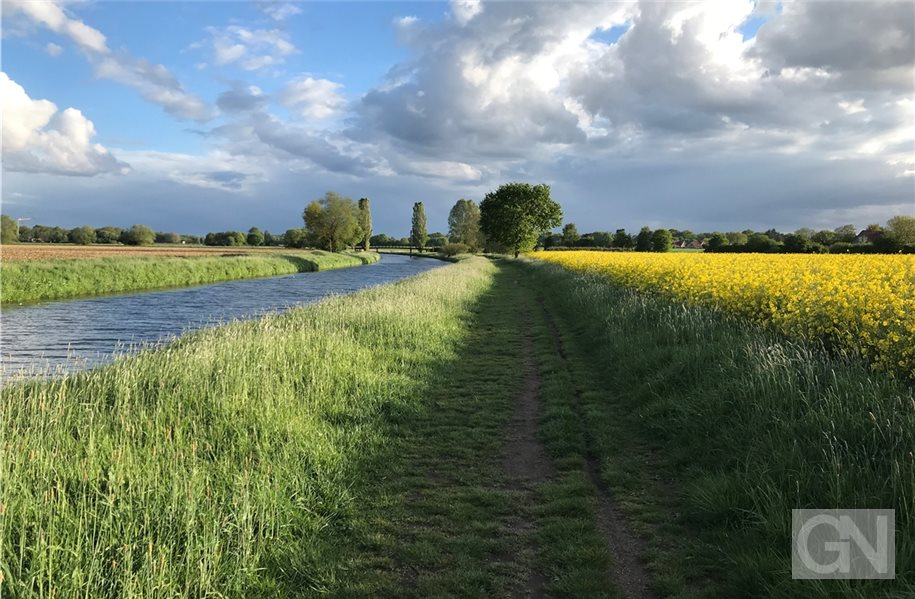Für Insekten und Wildtiere: Die Grafschaft soll blühen